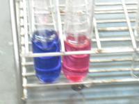 色が鮮やかな実験です